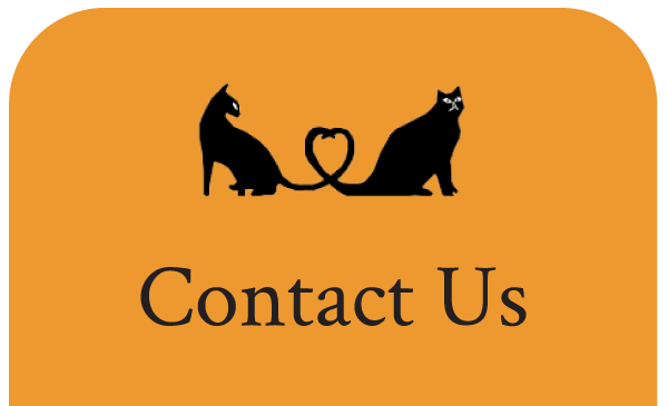 Contact Us - Cat Vet